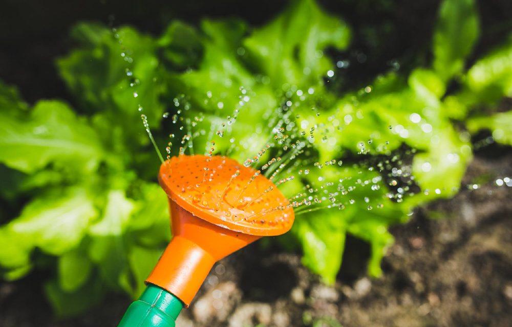 Bove to talk gardening at forum meeting
