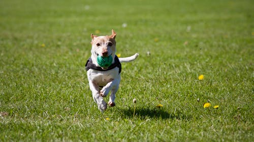 Dog park proposed for Town Hall lot