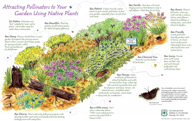 Pollinator Pathways: What are they?
