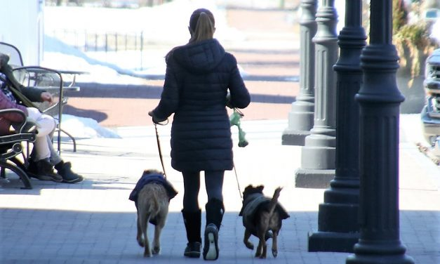 Dog owners face fines for not picking up