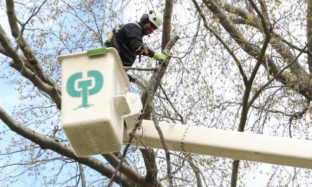 Arbor Day maintenance for historic trees
